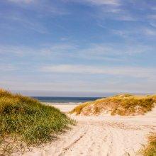 Summer in the dunes